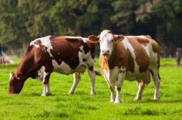 6 Reasons You Should Stop Eating Meat Right Now